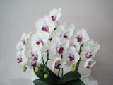 法人向けの花束やアレンジメント